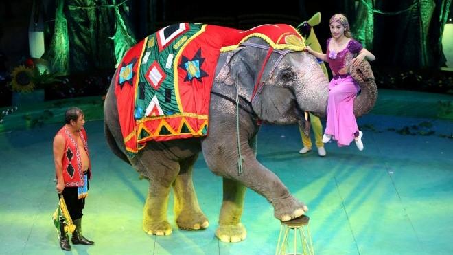 <em>Xiếc voi</em>
